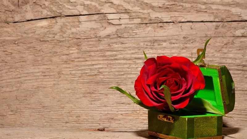 That Red Rose